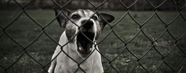 dog attacks